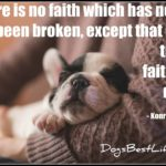 Dog inspiration: Faithful