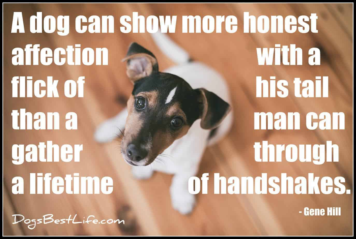 honest affection