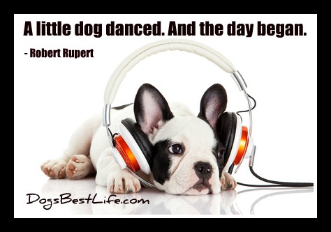 a little dog danced and the day began