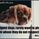 Dog inspiration: Intelligent dogs rarely want to please people whom they do not respect