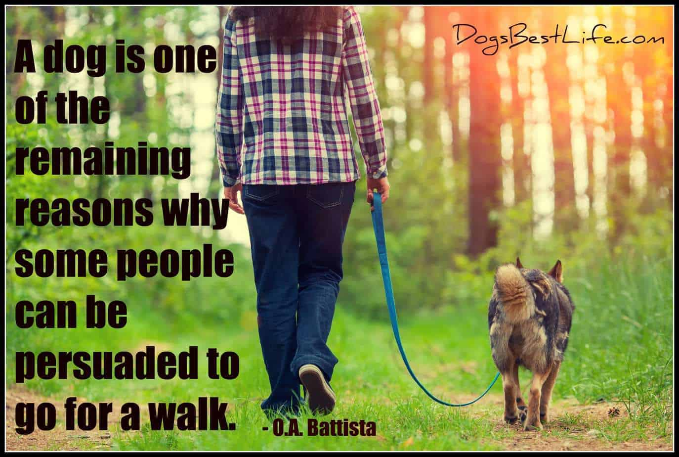 dog one of the few reasons people can still be persuaded to go for a walk