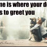 Dog inspirations: Home is where your dog runs to greet you