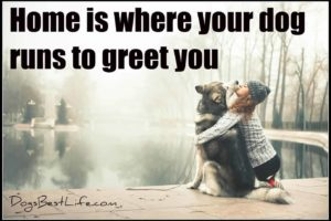 Home is where your dog runs to greet you