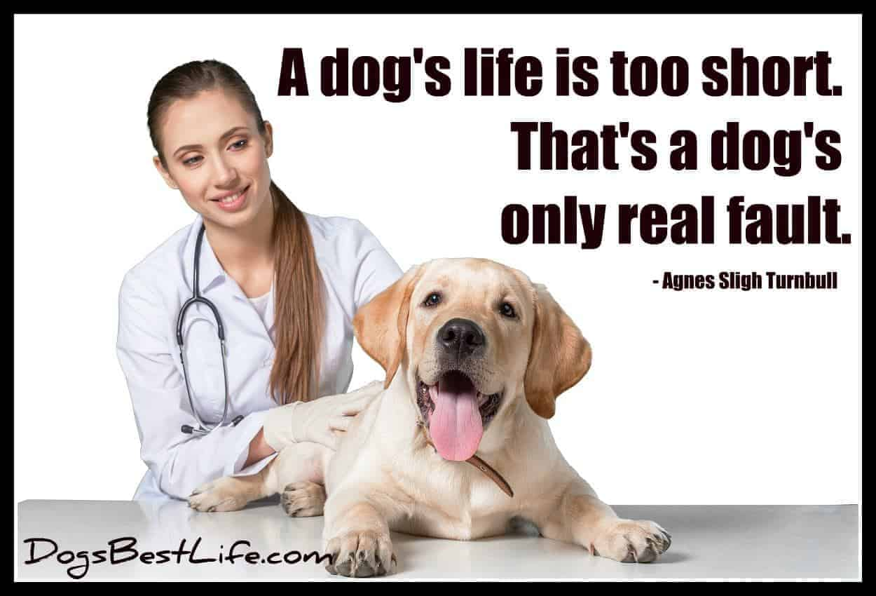 A dog's life is too short