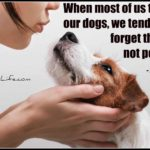 Dog inspiration: When most of us talk to our dogs ...