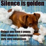 Silence is golden ... unless you have a puppy, then silence is suspicious, very, very suspicious