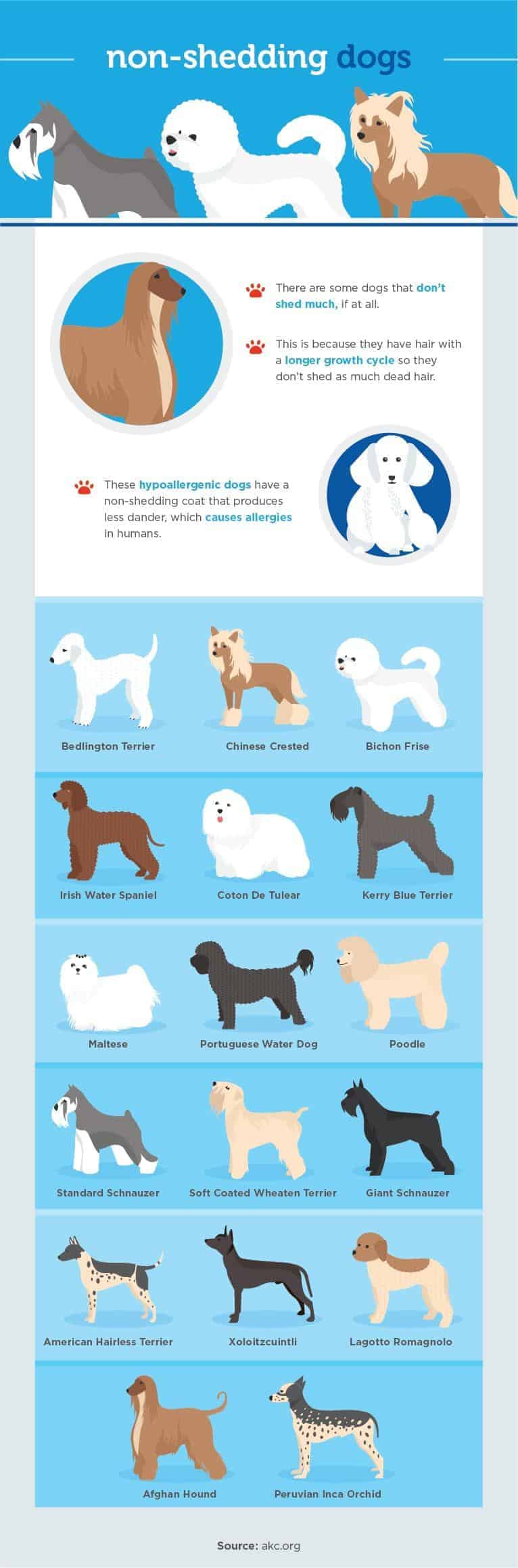 non-shedding dogs