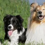 Avoid the green-eyed canine monster