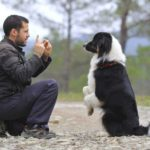 Dog training: Speak softly