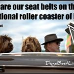 Dog inspiration: Pets are our seatbelts on the roller coaster of life