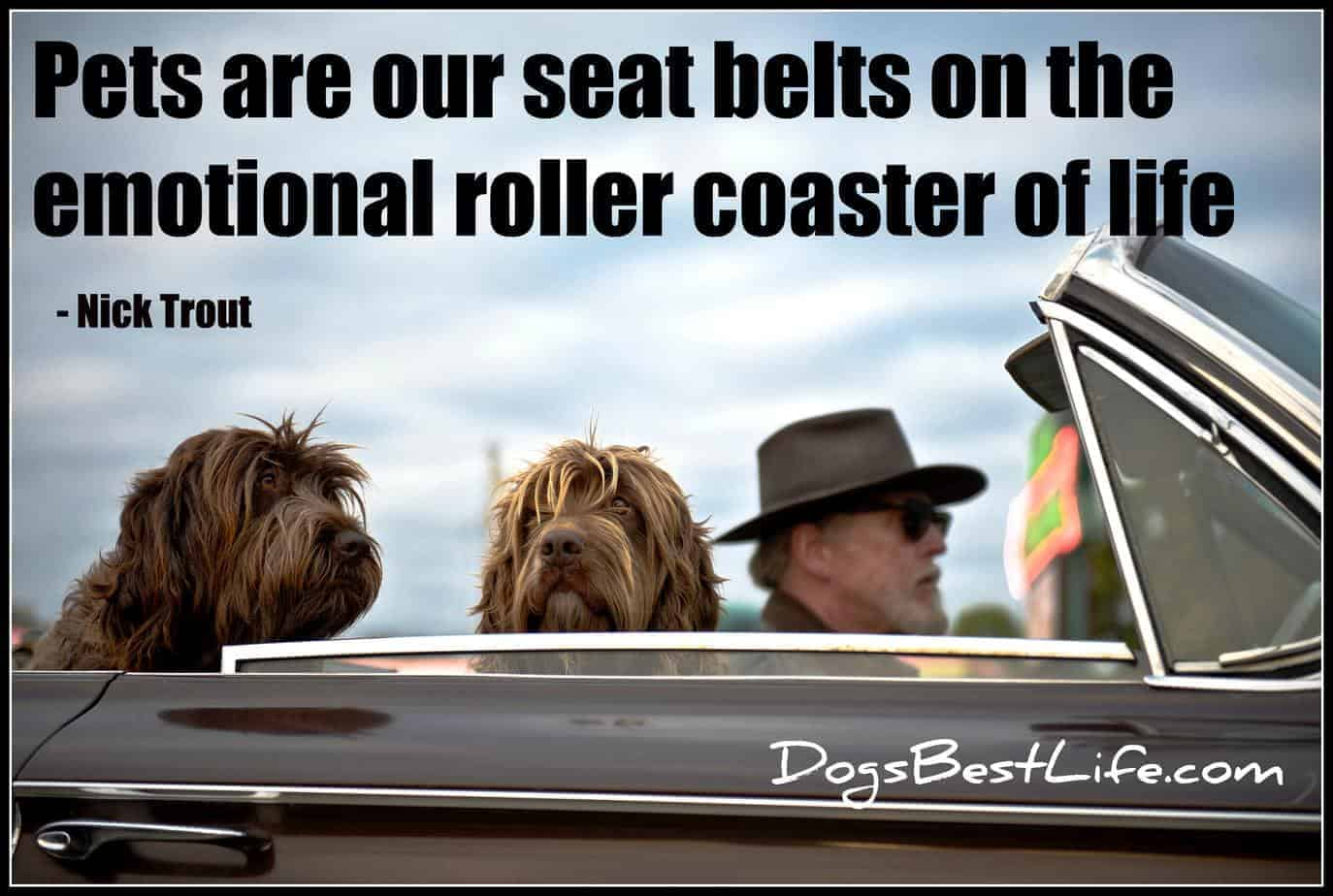 Pets are our seatbelts on the roller coaster of life