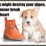 Dog inspiration: A dog will never break your heart