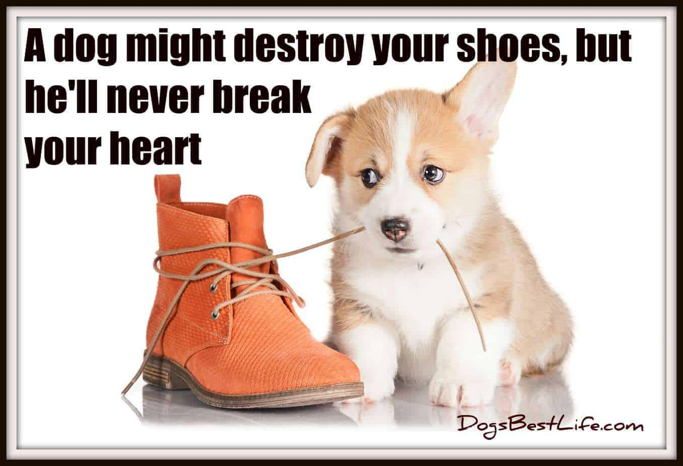 A dog might destroy your shoes, but he'll never break your heart
