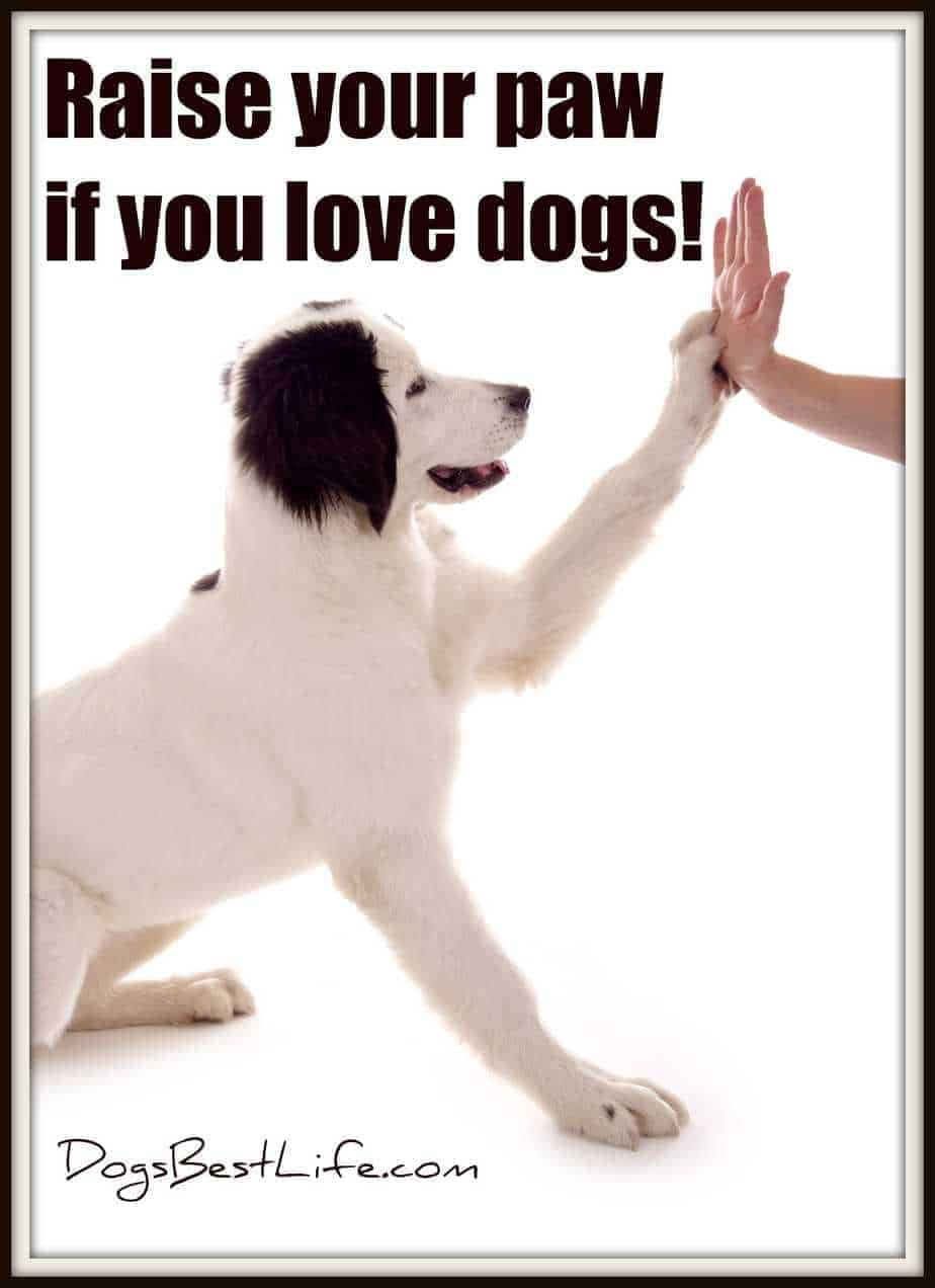 Raise your paw if you love dogs