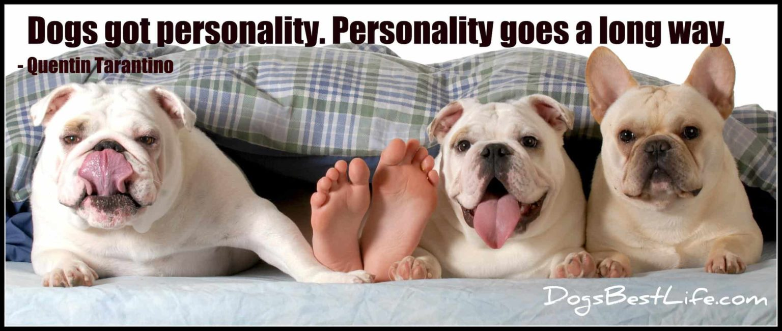 dogs got personality