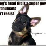 Dog inspiration: A dog's head tilt is a super power that humans can't resist