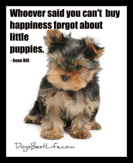 buy happiness forgot about little puppies puppies