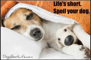 spoil your dog