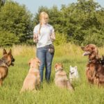 Tips for training multiple dogs
