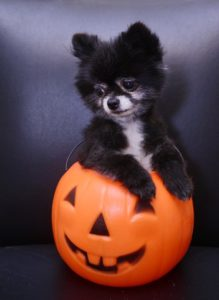 dog-friendly halloween
