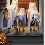 halloween dog safety