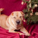 Christmas trees pose dangers for puppies
