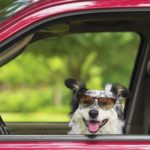 5 tips for planning a dog-friendly travel adventure