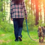 Four dog training essentials
