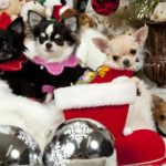 Choose the right holiday gift for your dog