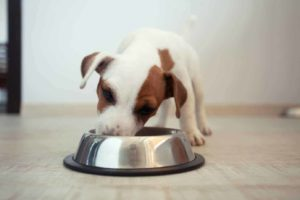 Use a dog food guide to find what's right to feed your puppy.