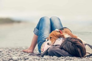 Pups like beagles who snuggle with their owners help dog owners live longer.