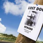 Help your lost dog find his way home