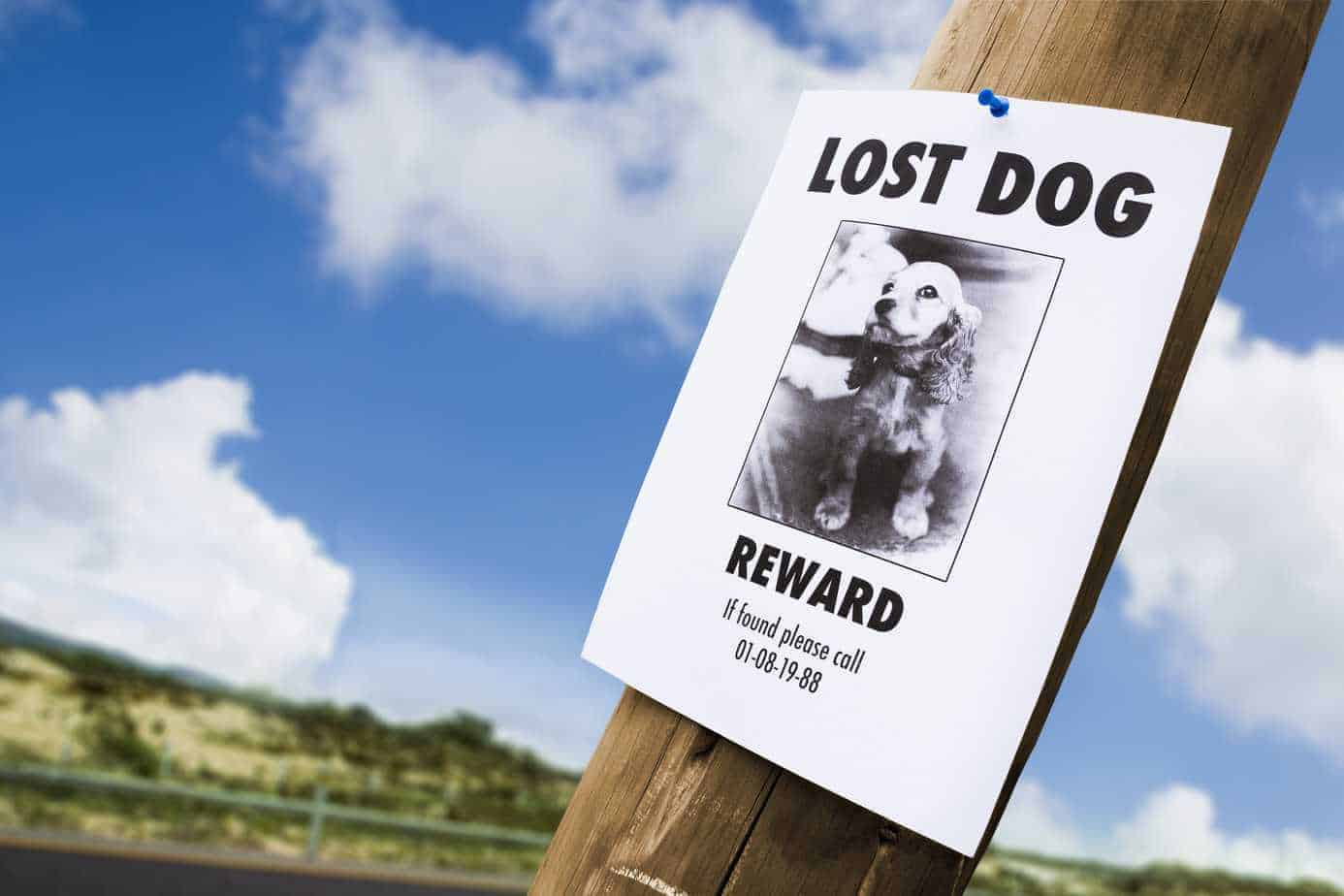 lost dog scam