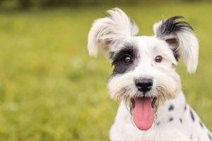 speak fluent dog