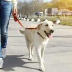 7 tips to make the most of daily dog walks