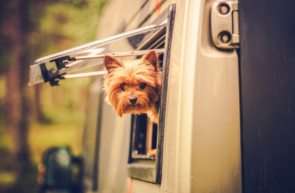 Yorkie peers out through window of RV. Prepare for doggie road trip disasters from bees to bears and more before you hit the open road in your RV with your pup.