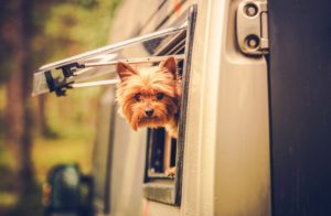 doggie road trip disasters