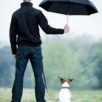 Help your dog survive thunderstorms
