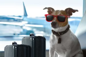 dog plane safety