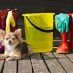 Keep your dog happy and your home clean
