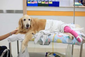 pet insurance pre-existing condition