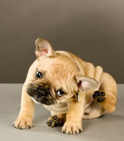 dog spring danger: ticks