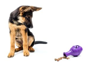 German shepherds need mental stimulation from items like puzzle toys.