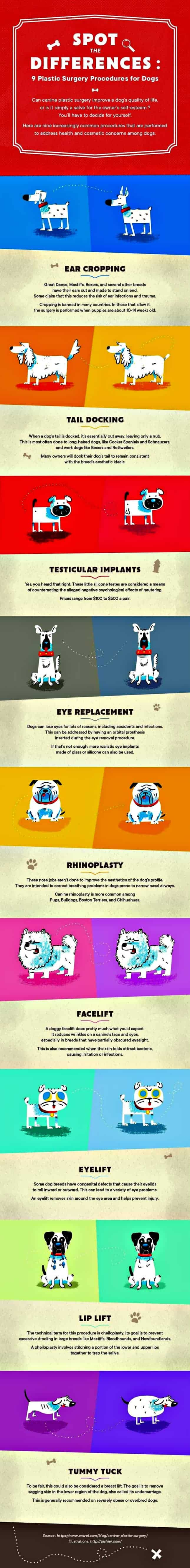 Dog plastic surgery infographic