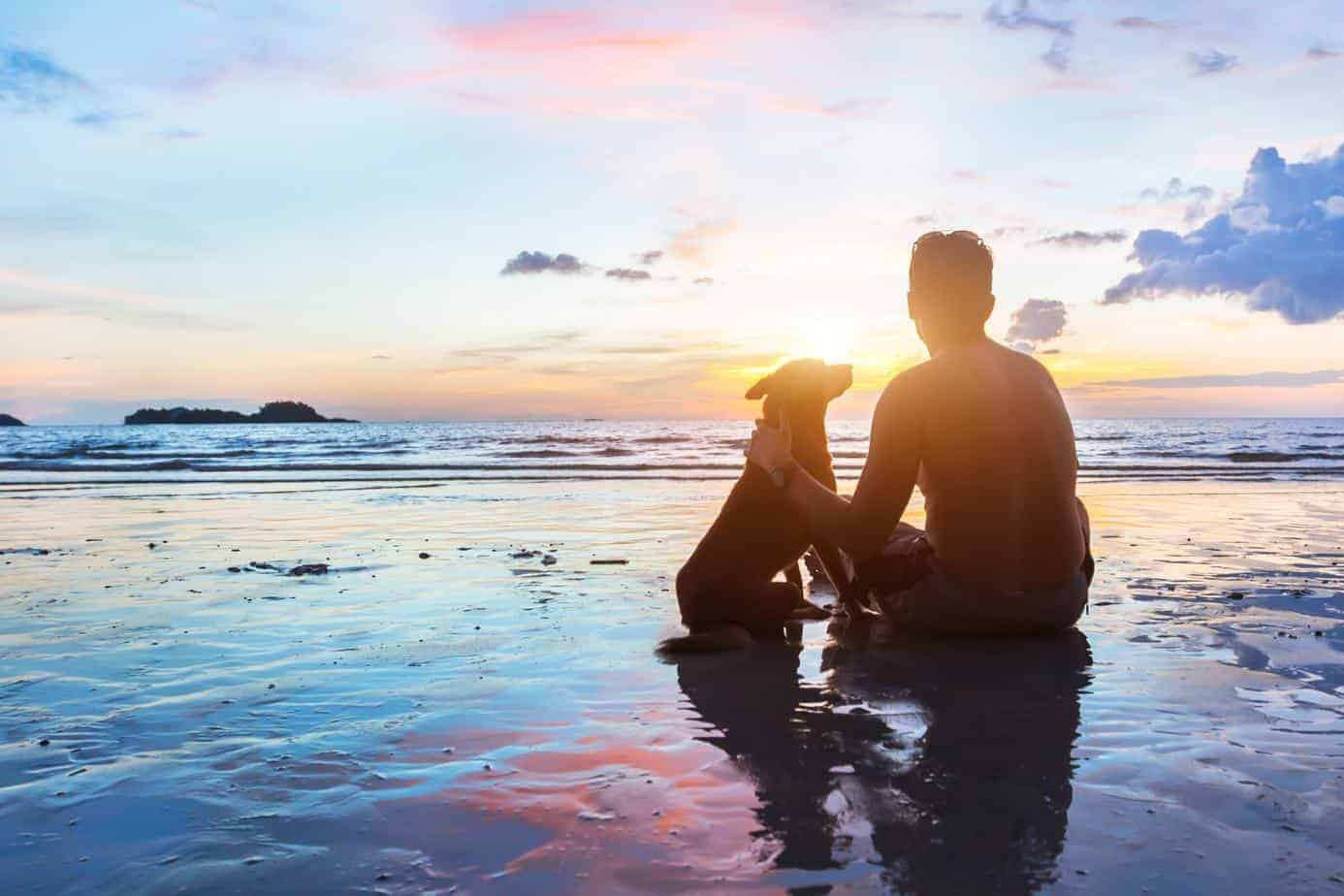 Dogs help people with mental illness by reducing the health risks of loneliness. Dog and man watch sunset on beach.