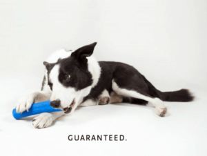 Shop smart for your dog with durable toys from WO.