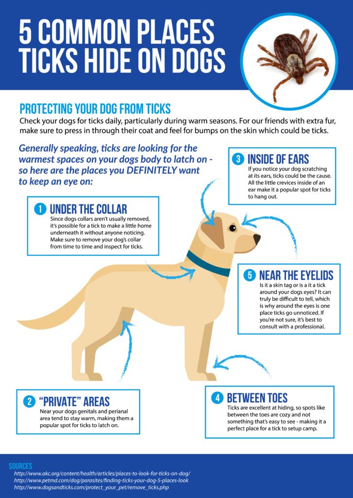 Graphic explains how a tick attacks a dog