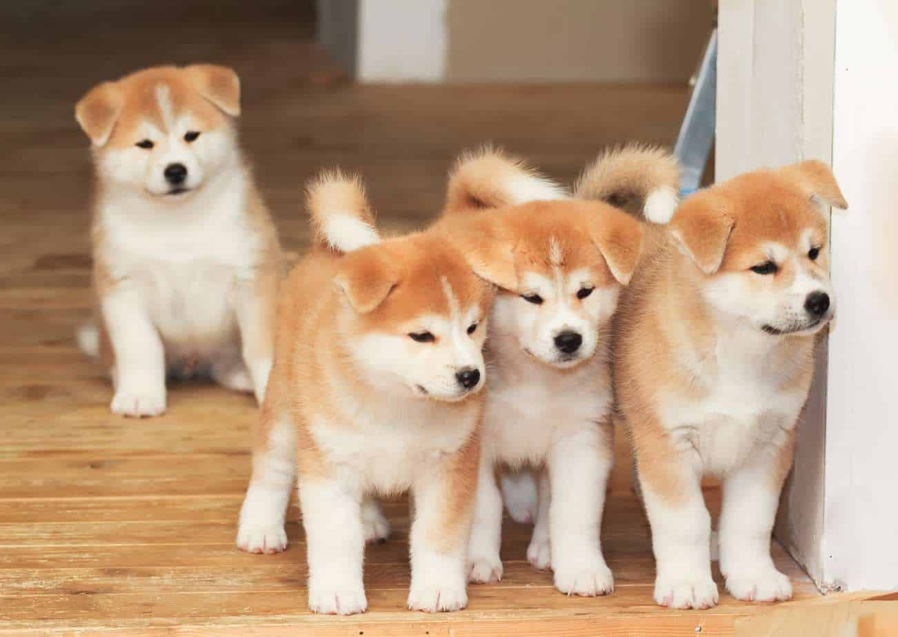 Image result for independent dogs