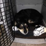 If taught properly, a crate can provide a safe and puppy-proofed area for your dog to sleep in while you are away, or not able to keep that constant eye on him.