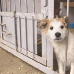 Adopted dog: Mixed breed waits at shelter to be taken to his new home.